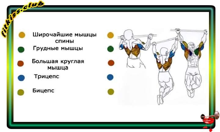 vidy-podtiagivanii-na-turnike-i-gruppy-myshtc-2