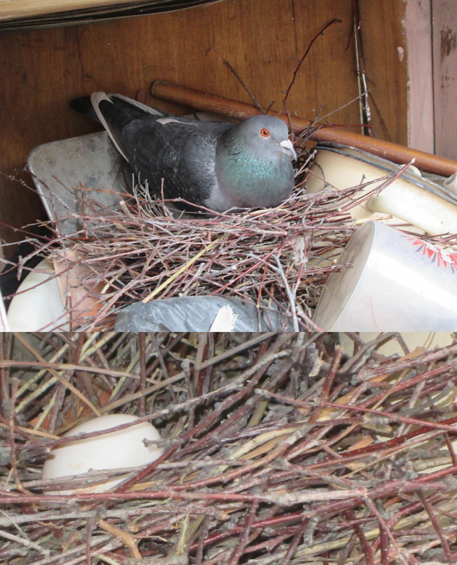 Голуби свили гнездо на балконе. Что это за примета?
