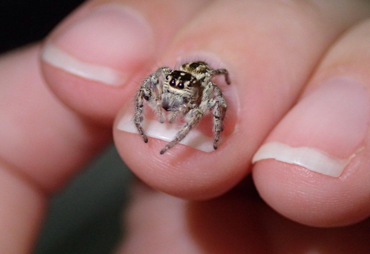 О чем вещает примета — паук на человеке?