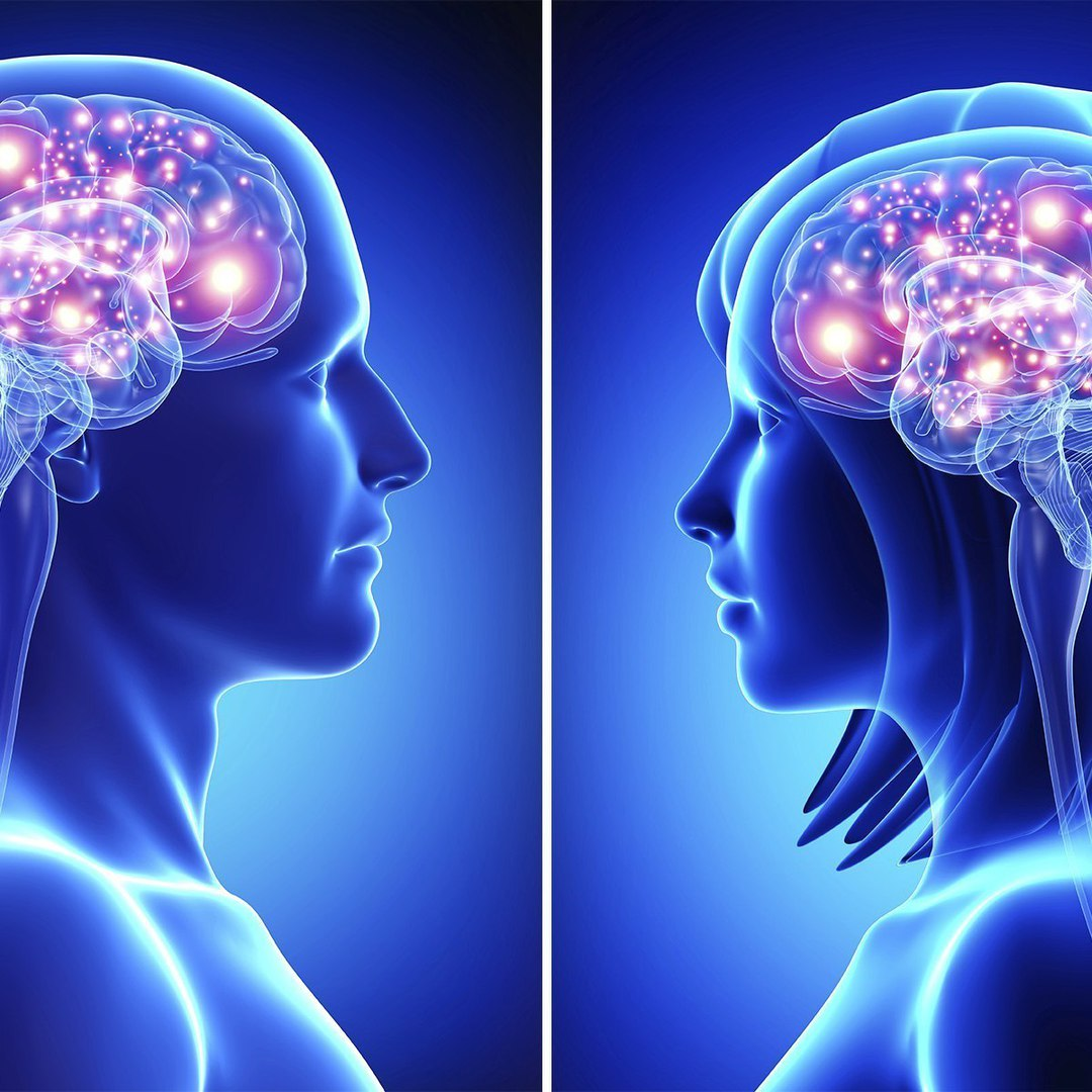 Мозг мужчины и мозг женщины: основные различия