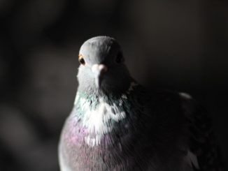 Народная примета — птица накакала, что произойдет?